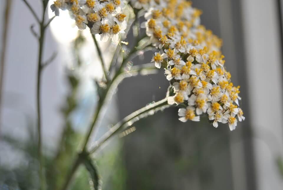 idealne zioła na żołądek